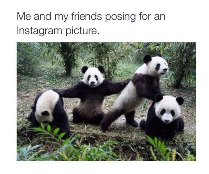 "65 Funny Friend Memes - ""Me and my friends posing for an Instagram picture."""
