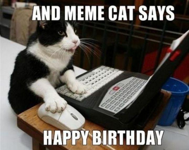 "101 Funny Cat Birthday Memes - ""And meme cat says happy birthday."""