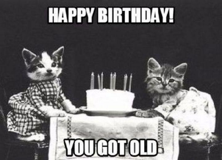 """101 Funny Cat Birthday Memes - """"Happy birthday! You got old."""""""