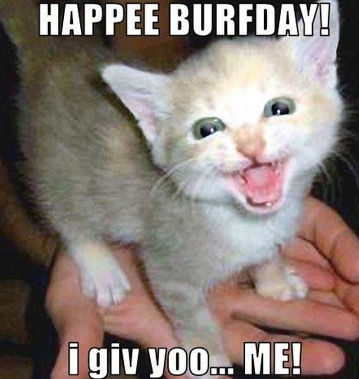 "101 Funny Cat Birthday Memes - ""HAPPEE BURFDAY! I giv you...ME!"""