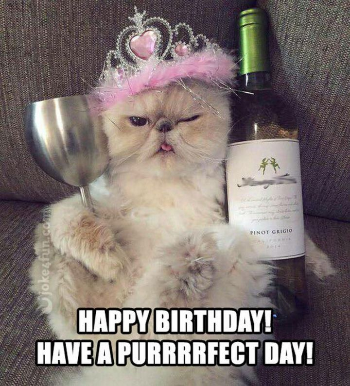 "101 Funny Cat Birthday Memes - ""Happy birthday! Have a purrfect day!"""