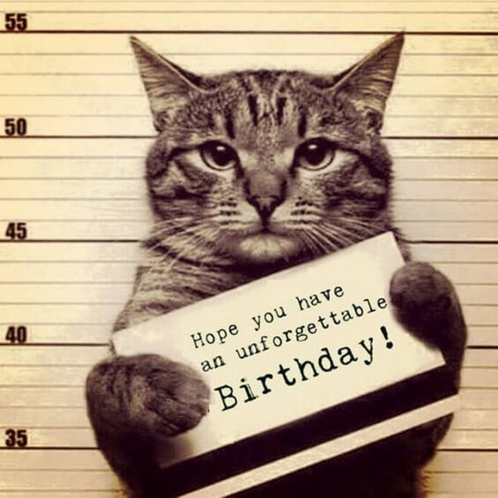 "101 Funny Cat Birthday Memes - ""Hope you have an unforgettable birthday!"""