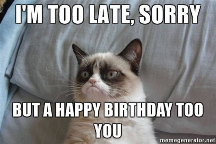 "101 Funny Cat Birthday Memes - ""I'm too late, sorry but a happy birthday too you."""