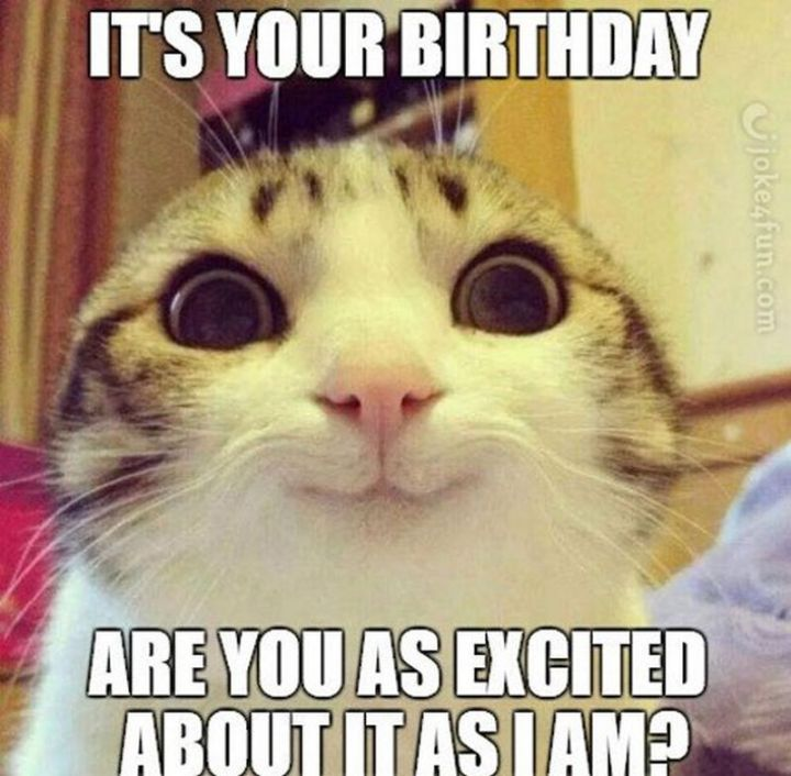 "101 Funny Cat Birthday Memes - ""It's your birthday. Are you as excited about it as I am?"""