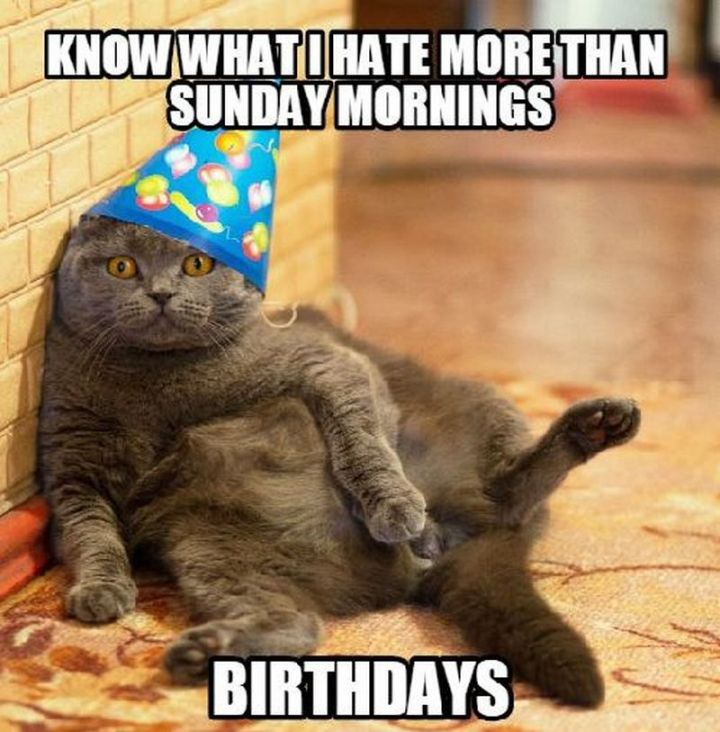 "101 Funny Cat Birthday Memes - ""Know what I hate more than Sunday mornings? Birthdays."""