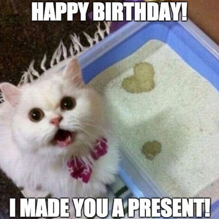 "101 Funny Cat Birthday Memes - ""Happy birthday! I made you a present!"""