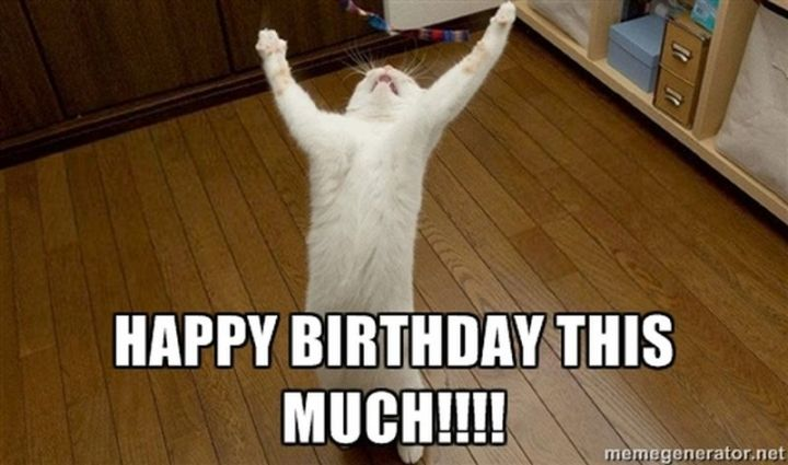 "101 Funny Cat Birthday Memes - ""Happy birthday this much!!!!"""