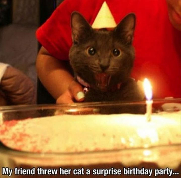 "101 Funny Cat Birthday Memes - ""My friend threw her cat a surprise birthday party..."""