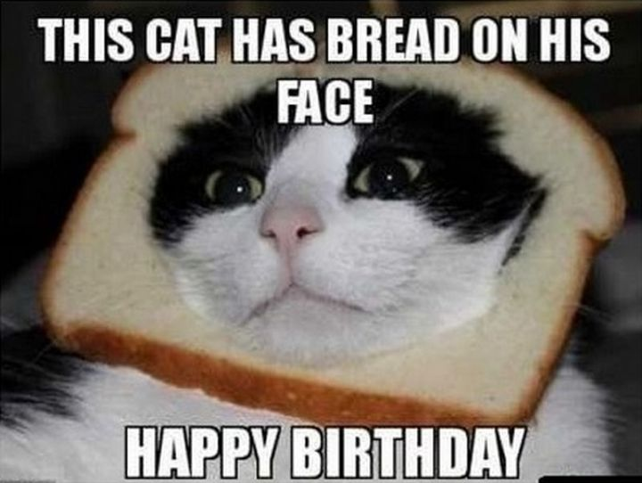 "101 Funny Cat Birthday Memes - ""This cat has bread on his face. Happy birthday."""