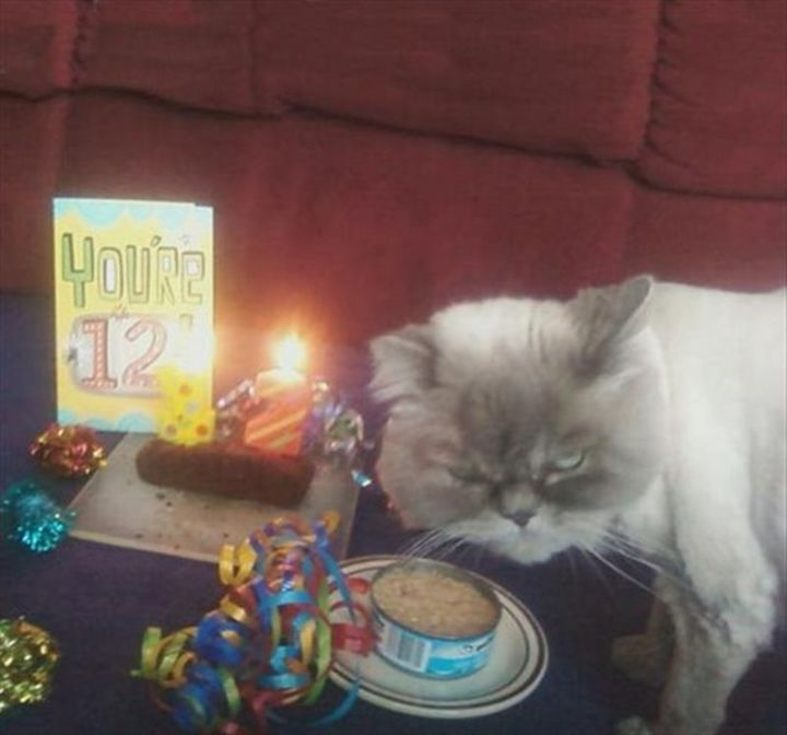 "101 Funny Cat Birthday Memes - ""You're 12!"""