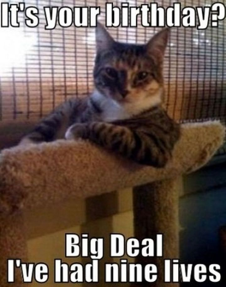 "101 Funny Cat Birthday Memes - ""It's your birthday? Big deal, I've had nine lives."""