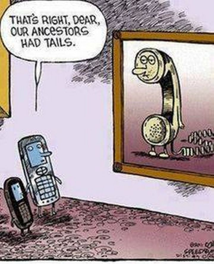 """61 Funny Clean Memes - """"That's right, dear, our ancestors had tails."""""""