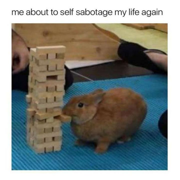 "67 Hilarious Memes - ""Me about to self sabotage my life again."""