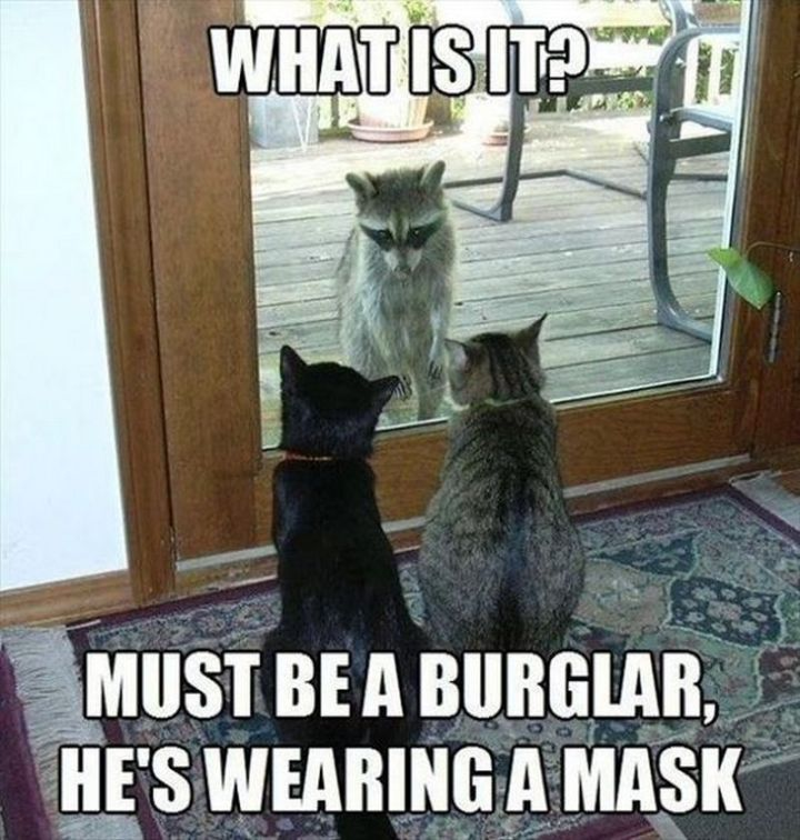"67 Hilarious Memes - ""What is it? Must be a burglar, he's wearing a mask."""