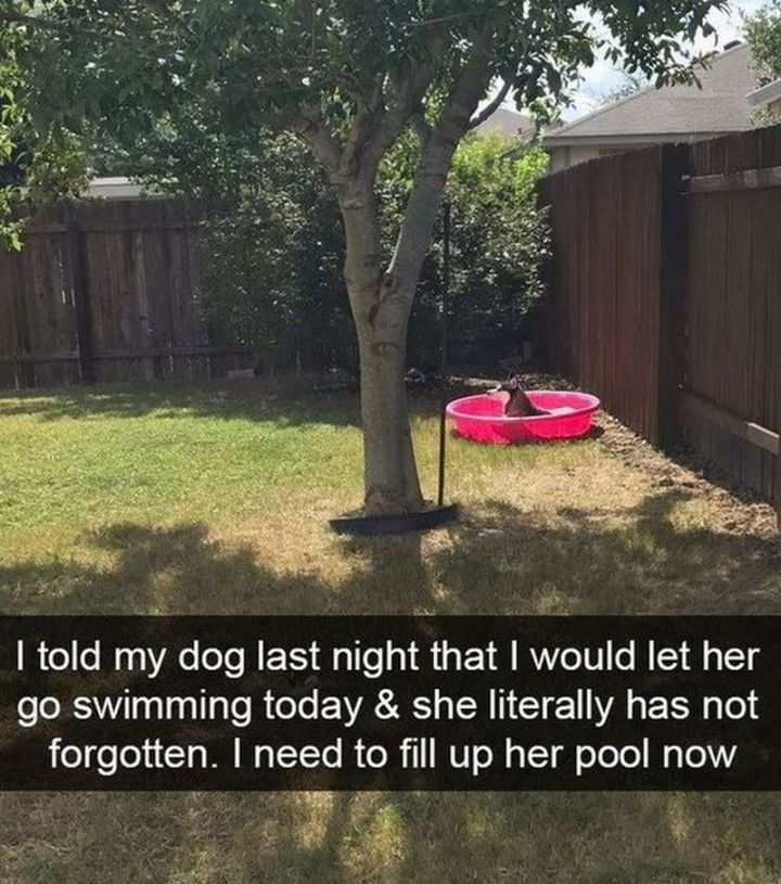 "67 Hilarious Memes - ""I told my dog last night that I would let her go swimming today and she literally has not forgotten. I need to fill up her pool now."""