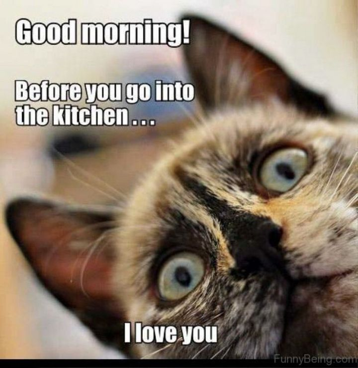 "101 Funny Good Morning Memes - ""Good morning! Before you go into the kitchen...I love you."""