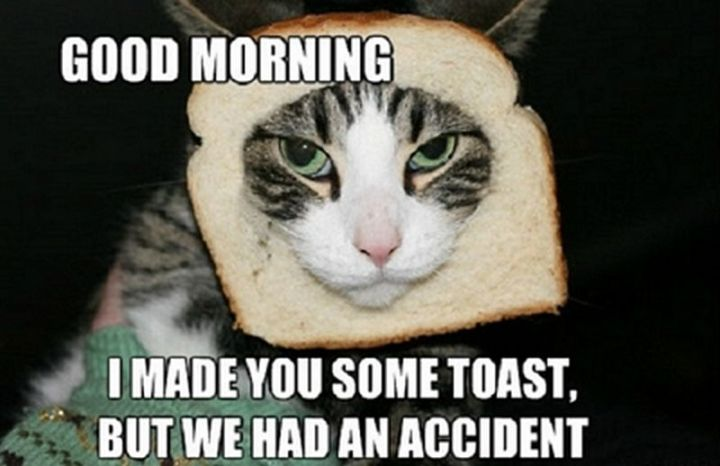 "101 Funny Good Morning Memes - ""Good morning. I made you some toast, but we had an accident."""