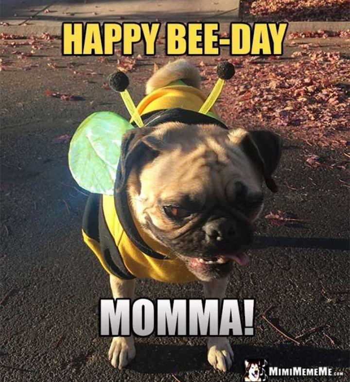 """101 Happy Birthday Mom Memes - """"Happy bee-day momma!"""""""