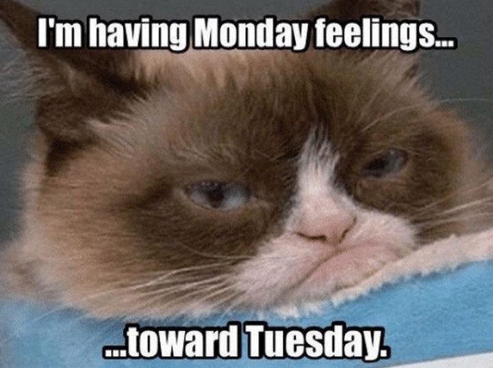 "55 Tuesday Quotes - ""I am having Monday feelings towards Tuesday."" - Unknown"
