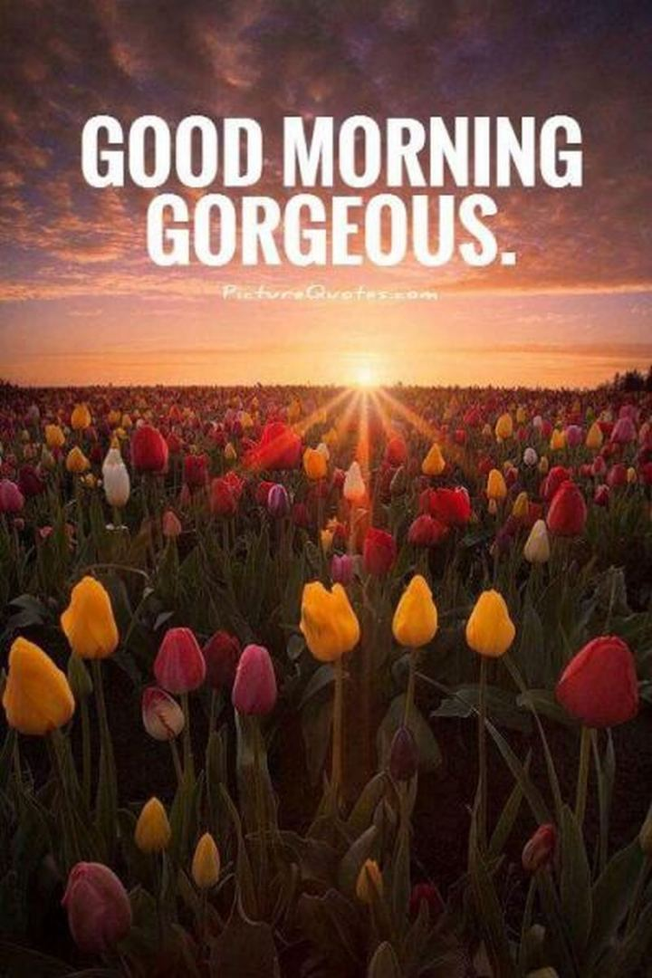 """75 Good Morning Quotes - """"Good morning gorgeous."""""""