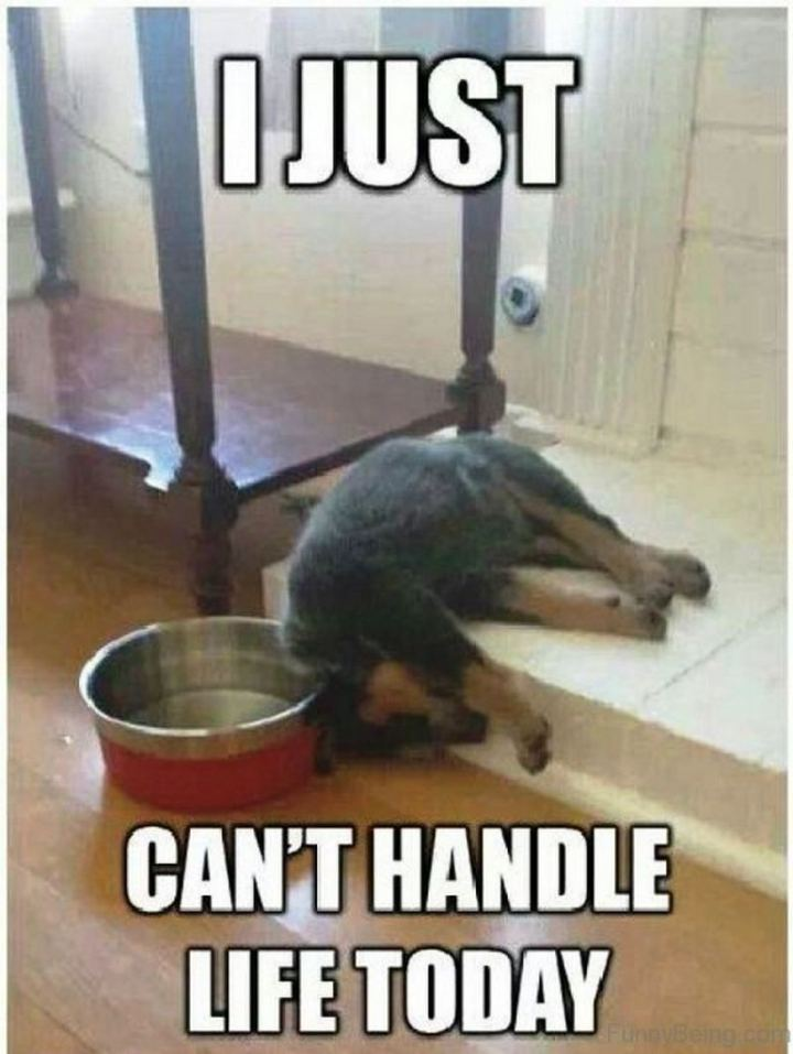 """81 Funny Life Memes - """"I just can't handle life today."""""""