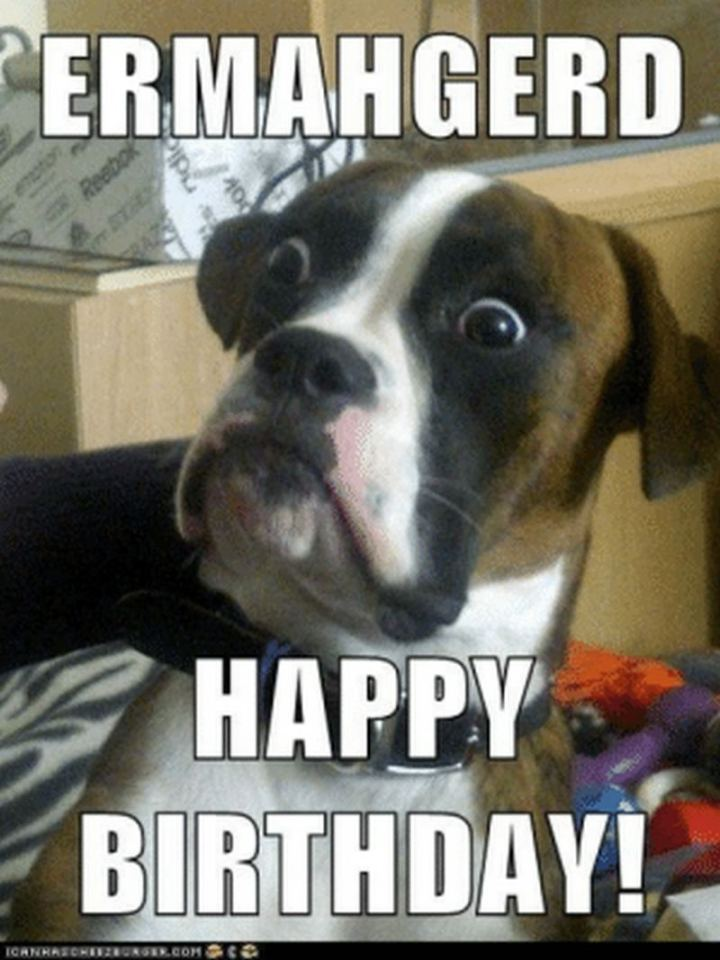 101 Funny Happy Birthday Dog Memes for Paw Lovers Everywhere