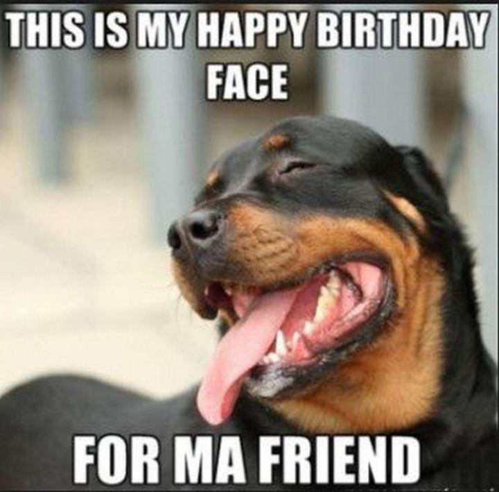 dog-happy-birthday-memes-92.jpg?resize=7