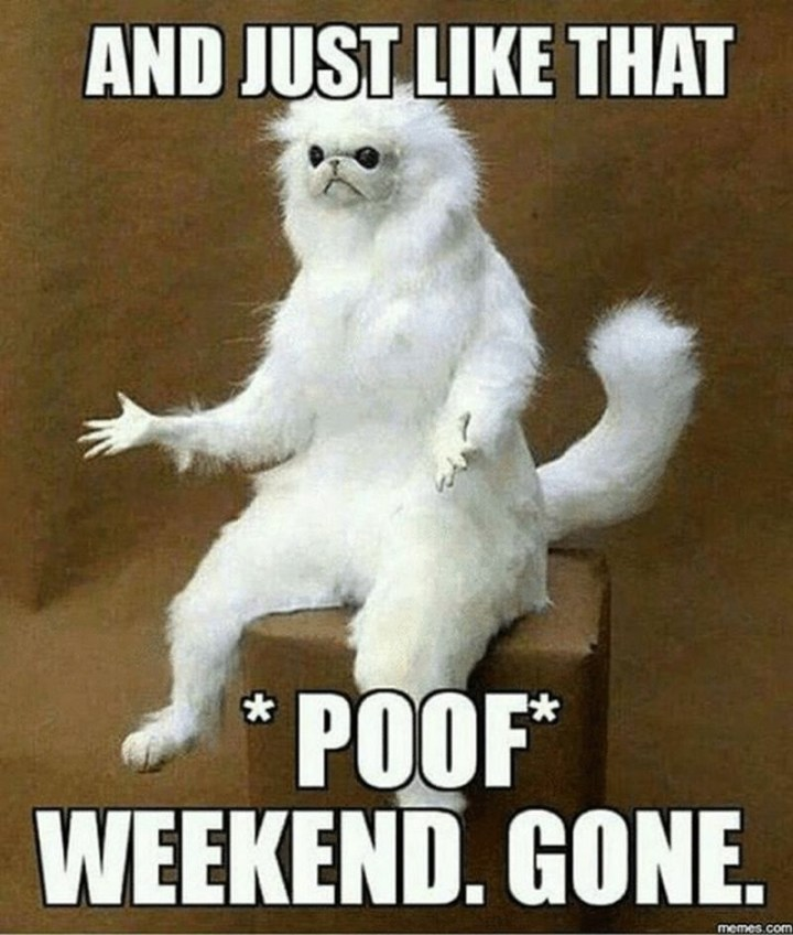"101 Saturday Memes - ""And just like that *poof* weekend. Gone."""