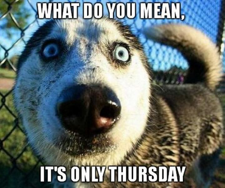 "101 Thursday Memes - ""What do you mean, it's only Thursday."""