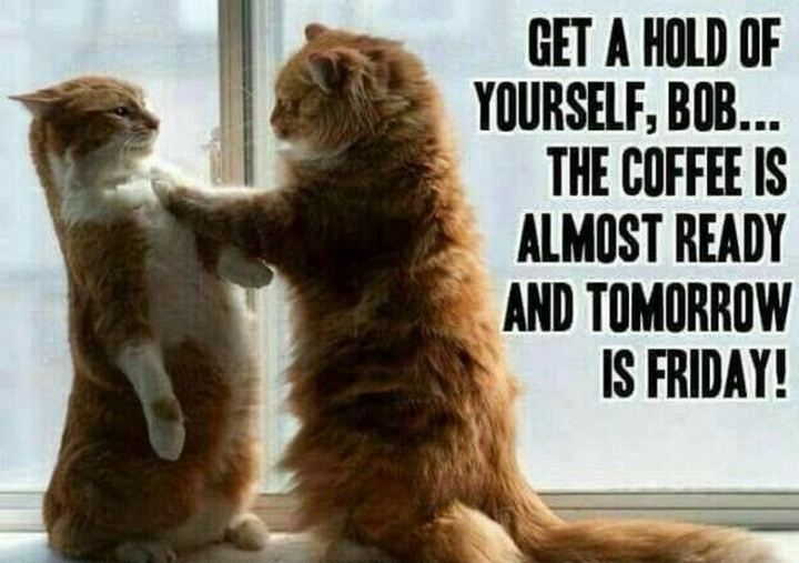 "101 Thursday Memes - ""Get a hold of yourself, Bob...The coffee is almost ready and tomorrow is Friday!"""