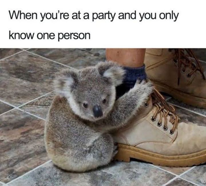 "75 Introvert Memes - ""When you're at a party and you only know one person."""