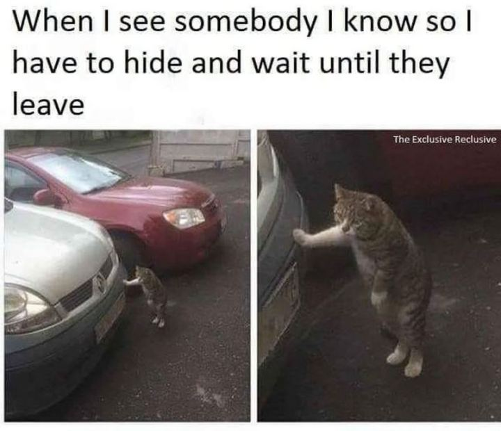 "75 Introvert Memes - ""When I see somebody I know so I have to hide and wait until they leave."""