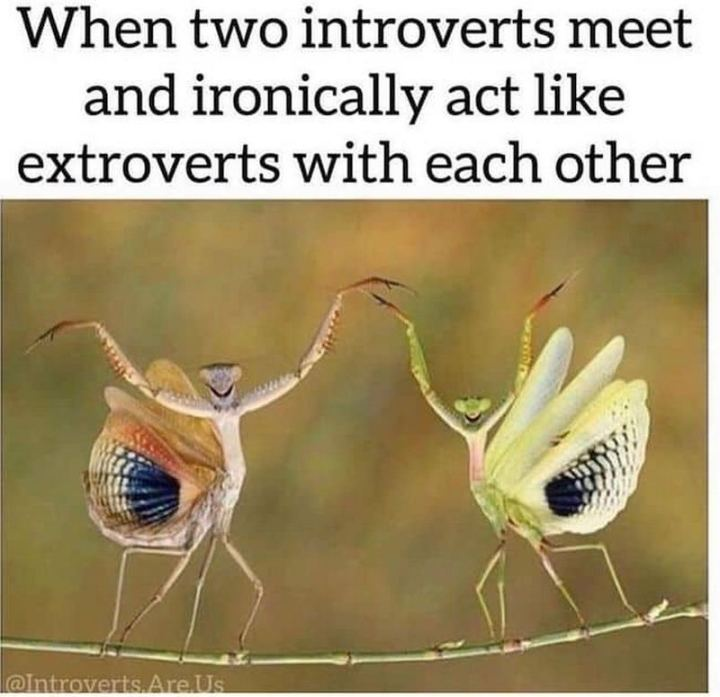 "75 Introvert Memes - ""When two introverts meet and ironically act like extroverts with each other."""