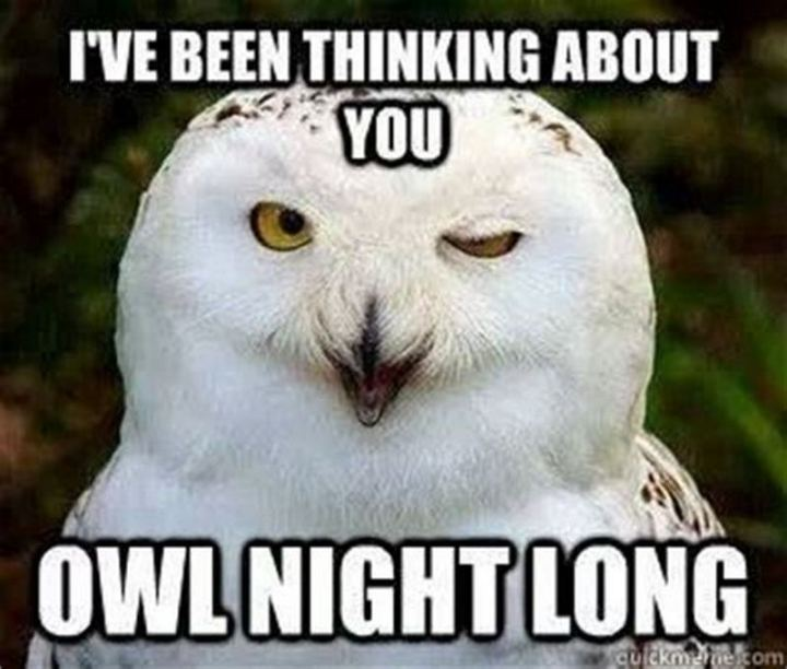 "77 ""Thinking of You"" Memes - ""I've been thinking about you owl night long."""