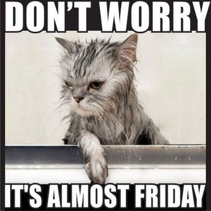 "55 ""Almost Friday"" Memes - ""Don't worry, it's almost Friday."""