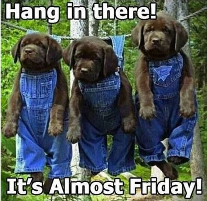 "55 ""Almost Friday"" Memes - ""Hang in there! It's almost Friday!"""