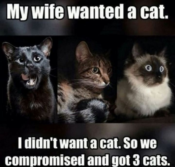 """My wife wanted a cat. I didn't want a cat. So we compromised and got 3 cats."""