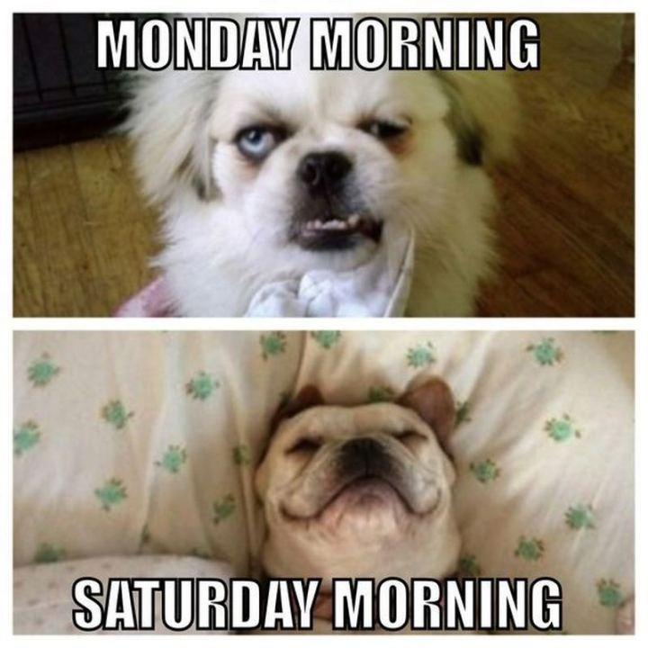 """""""Monday morning VS Saturday morning."""""""