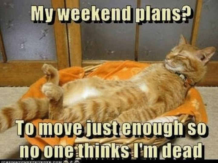 """My weekend plans? To move just enough so no one thinks I'm dead."""