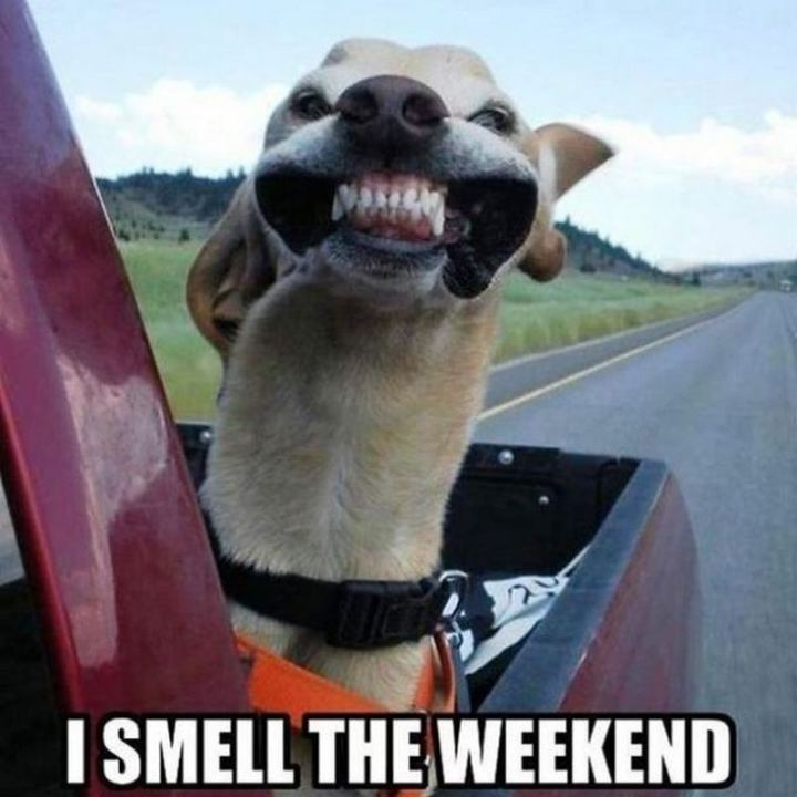 """I smell the weekend."""