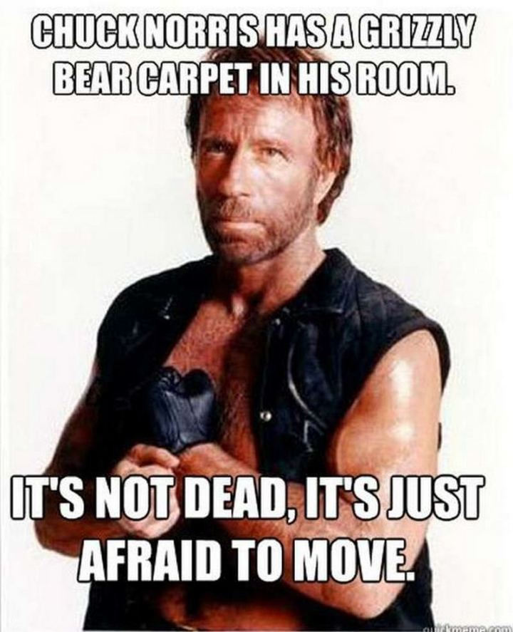 """Chuck Norris has a grizzly bear carpet in his room. It's not dead, it's just afraid to move."""