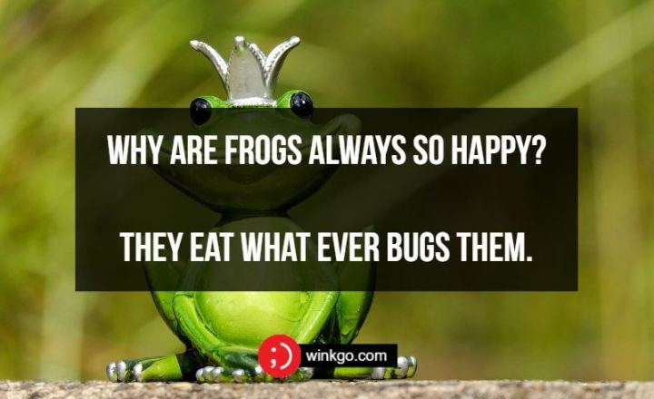 71 Two-Line Funny Jokes - Why are frogs always so happy? They eat what ever bugs them.