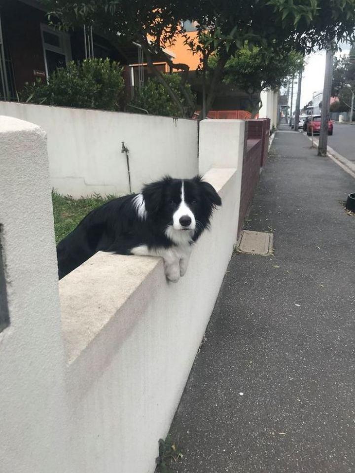 """Dogspotting: """"Good morning m'am."""""""