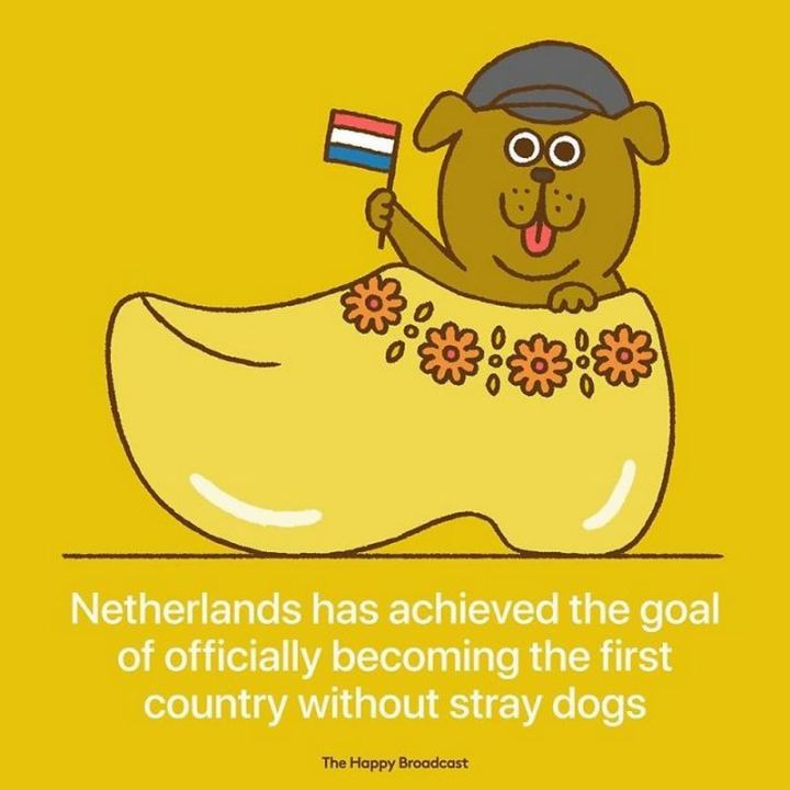 "The Happy Broadcast - ""Netherlands has achieved the goal of officially becoming the first country without stray dogs."""
