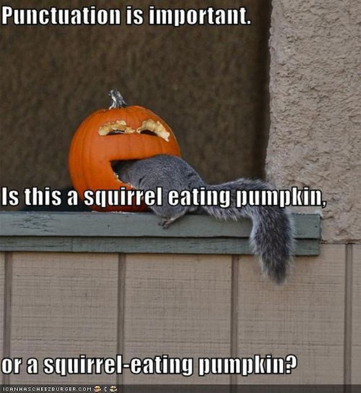 """""""Punctuation is important. Is this a squirrel eating pumpkin, or a squirrel-eating pumpkin?"""""""