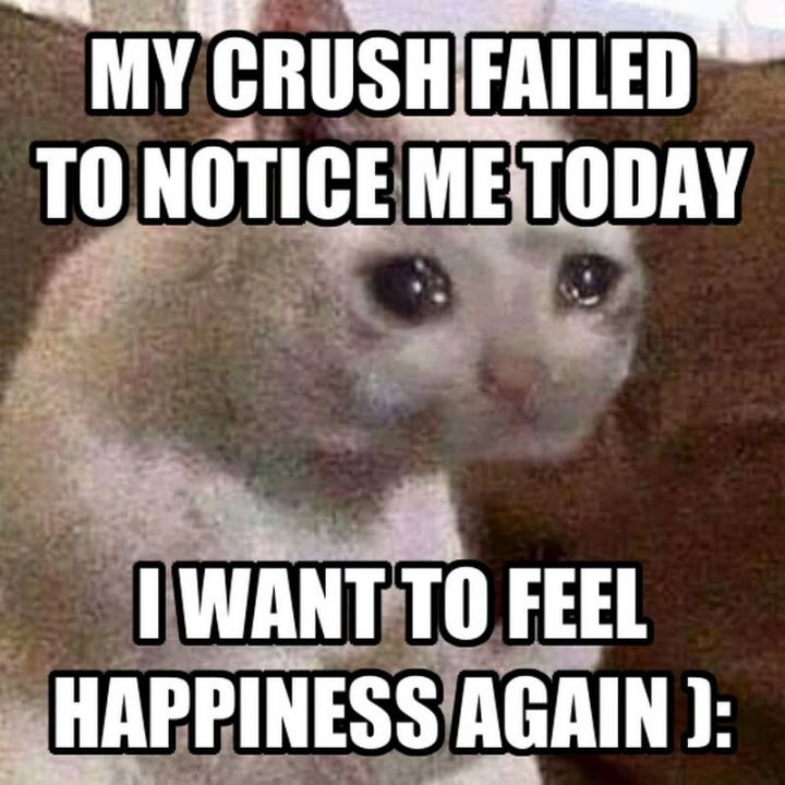 "29 Funny Crying Cat Memes - ""My crush failed to notice me today. I want to feel happiness again."""