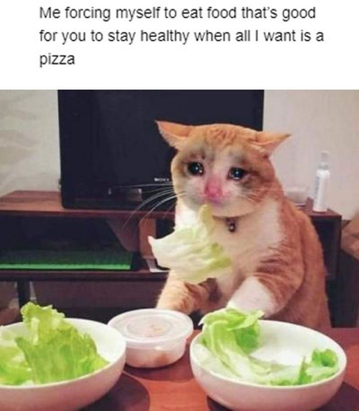 "29 Funny Crying Cat Memes - ""Me forcing myself to eat food that's good for you to stay healthy when all I want is a pizza."""