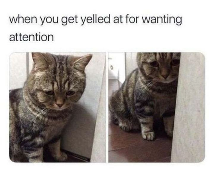 """When you get yelled at for wanting attention."""