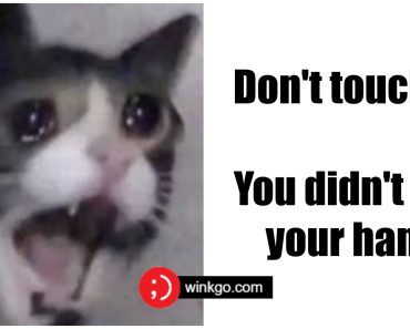 29 Funny Crying Cat Memes Will Make You All Warm and Fuzzy.