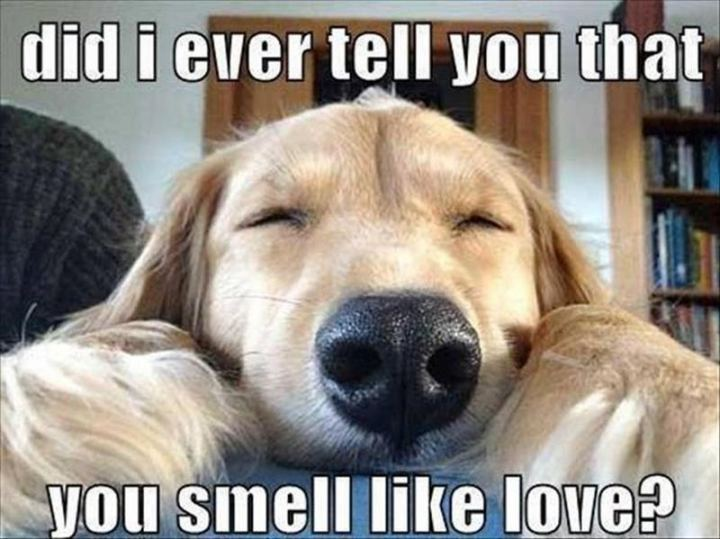 """35 """"I Like You"""" Memes - """"Did I ever tell you that you smell like love?"""""""